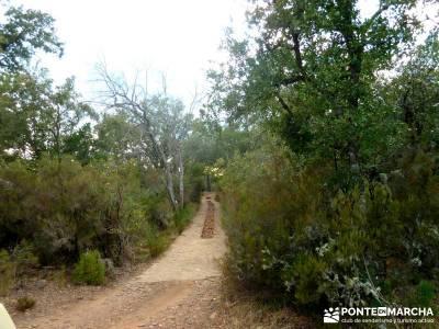 Berrea del Ciervo en Cabañeros y Montes de Toledo en 4x4;excursiones sierra madrid charca verde ped